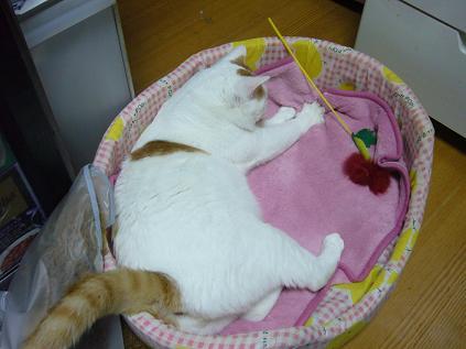 浜ちゃん猫ベッド