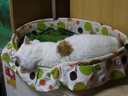 浜ちゃん熟睡3