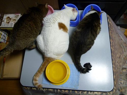 3匹体重測定