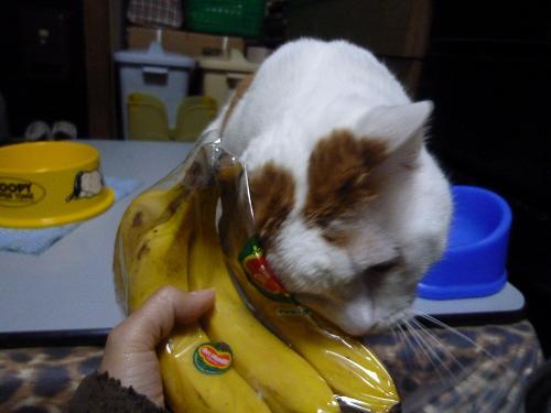浜ちゃんとバナナ