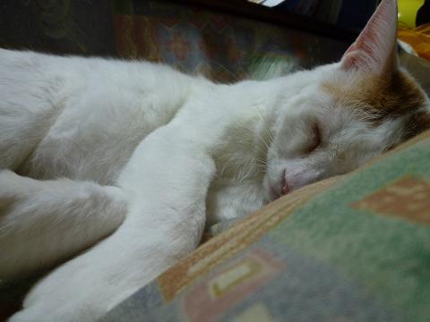 浜ちゃんの寝顔