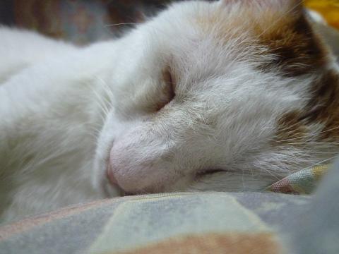浜ちゃんの寝顔2