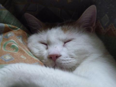 浜ちゃんの寝顔3