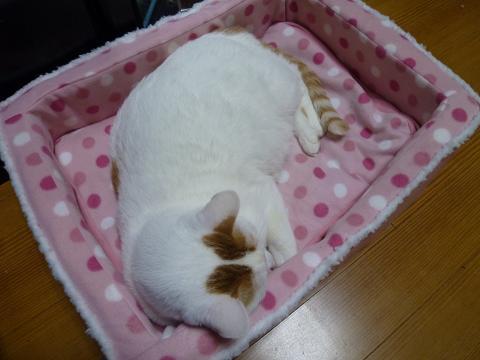浜新ベッド