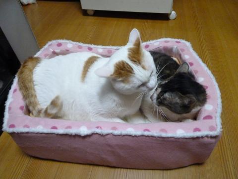 新しい敷毛布4