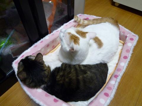 新しい敷毛布3