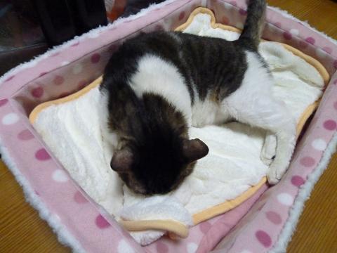 新しい敷毛布
