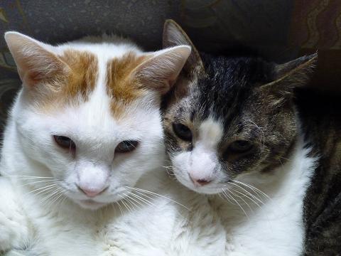 おんぶ猫4