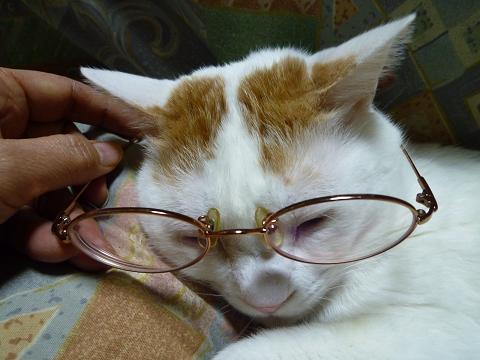 浜ちゃん眼鏡