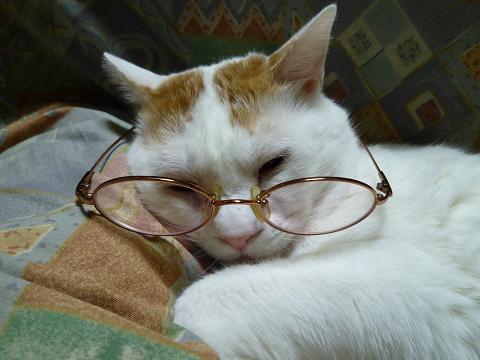 浜ちゃん眼鏡2
