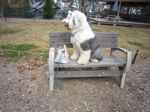 ベンチで待つ!