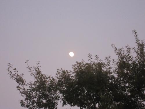 ドレミの月