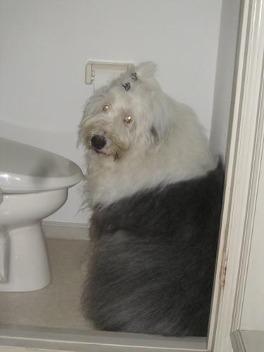 トイレへ!