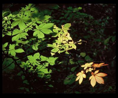 01・「森の詩」泉谷 昇-s