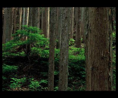 06・「こだまする森」岩田晃三-s