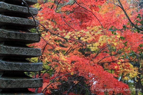 西林寺庭と紅葉