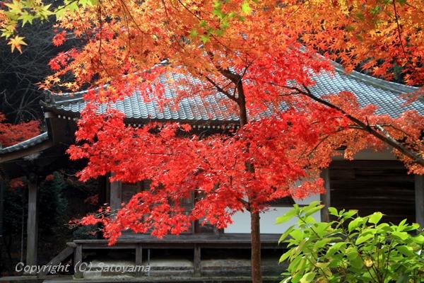 西林寺本堂紅葉