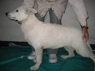 レミュー子犬 2.2