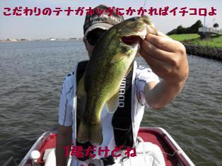 moblog_eea13af2_20110820080919.jpg