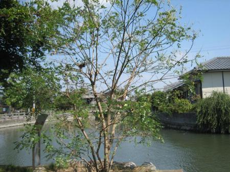 柳川の川下り 085 - コピー