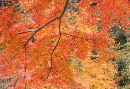 清水の紅葉 014 - コピー