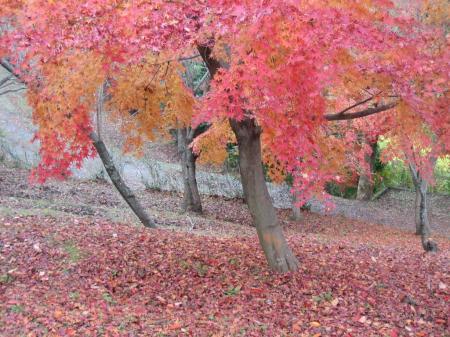 清水の紅葉 035 - コピー