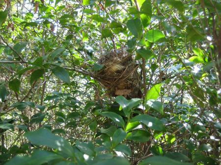 鳥の巣 025 - コピー