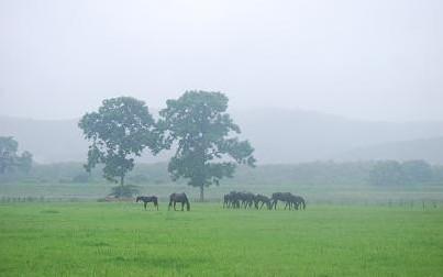7・雨・奥の放牧地