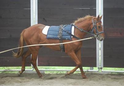 9・ネオ・調馬策