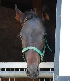 10・3頭・デュランダル当歳牡馬