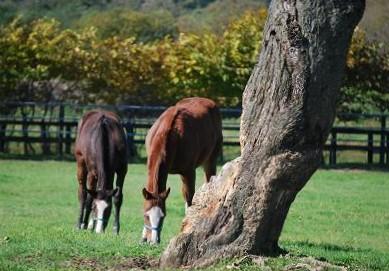 10・木・大木と馬