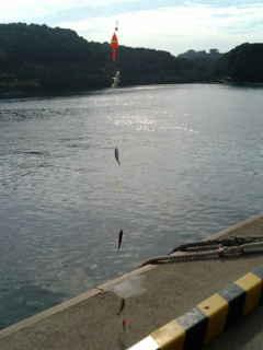 西海市横瀬での釣り(5)091013