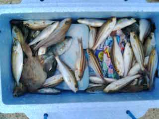 西海市横瀬での釣り(9)091013
