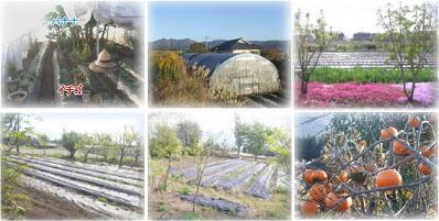果樹園写真