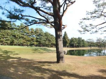 笹井C15番池