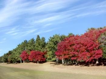 鶴舞の紅葉