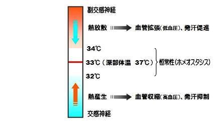 体温調節-1