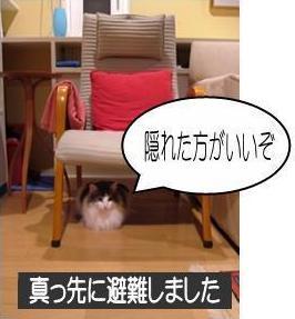 動く猫5-1