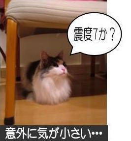 動く猫5-2