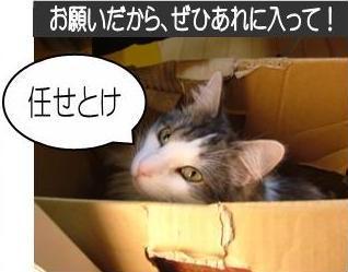 猫30-4
