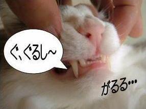 動く猫6-2