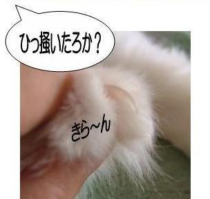 動く猫6-3