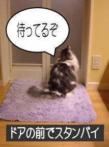 猫動画10