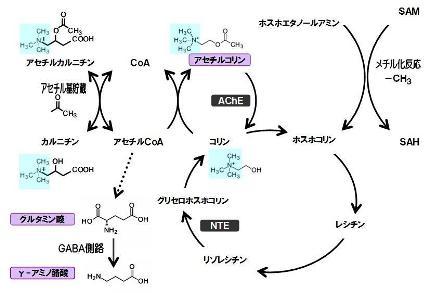 葉酸-10