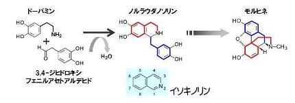 葉酸-13