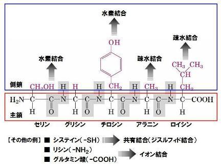 タンパク質-1