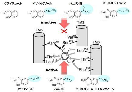 タンパク質-5