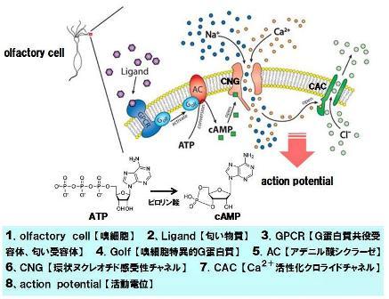 タンパク質-6