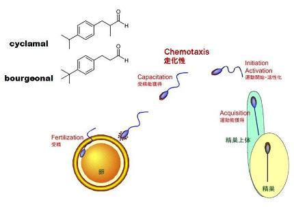 タンパク質-7