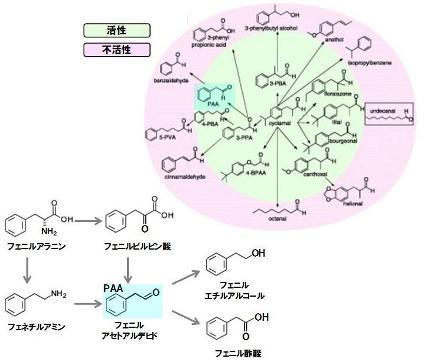 タンパク質-8